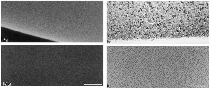Field Emission Scanning Electron Microscope (FE-SEM)